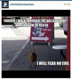 Check out: Animal Memes - Fear no evil. One of our funny daily memes selection. We add new funny memes everyday! Bookmark us today and enjoy some slapstick entertainment! Animal Captions, Funny Captions, Picture Captions, Memes Humor, Funny Memes, Jw Humor, Funny Cute, Funny Stuff, Hilarious Stuff