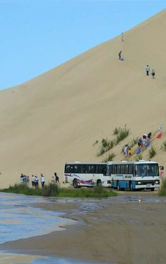 There is a daily parade of tour buses that roar up 90-Mile beach, drive thru Te Paki Stream, then head up to Cape Reinga before returning to Paihia, NZ