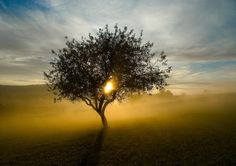 The morning fog and tree. How beautiful! New Every Morning, Early Morning, How Beautiful, Beautiful Words, Framed Prints, Canvas Prints, Art Prints, Morning Scripture, Lamentations 3 22 23