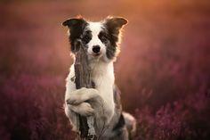 Photograph Sunrise by Alicja Zmyslowska on 500px