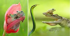 I Reveal The Secret World Of Frogs, Ants And Other Insects   Bored Panda