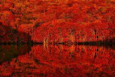 水面に映る、燃えるような紅の美しさ。死ぬまでに一度は見たい「蔦沼」奇跡の紅葉   by.S