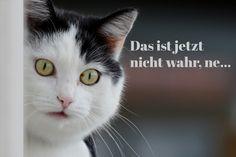Cats, Animals, Gatos, Animales, Animaux, Animais, Kitty, Cat, Animal