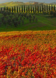 Los colores otoñales de la Toscana, Italia.