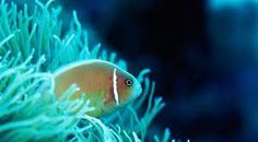 Bioluminescence - Google Search