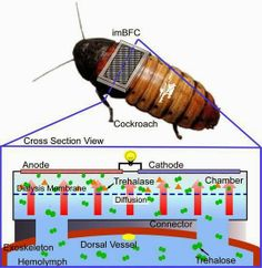 Next Time You See A Cockroach, It May Be A Cyborg