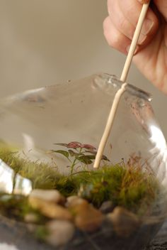 Making your own terrariums!