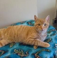 Murphy has been adopted!