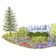 Foundation Garden Foundation Planting Plan and guide. A colorful alternative to the standard all-green landscape this foundation planting mixes broad-leafed evergreen shrubs and a sculptural tree with flowering perennials and groundcovers.