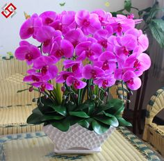 Aliexpress.com: Comprar Orquídeas phalaenopsis, flores en maceta ...