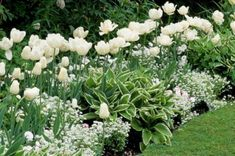 My Favorite Plant Combinations 65