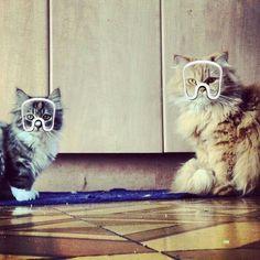 #ARTPOP CATS