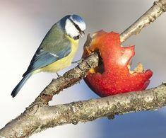Miljolare.no: Fuglemat Bird, Animals, Winter, Christmas, Winter Time, Xmas, Animales, Animaux, Birds