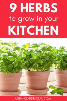 Growing herbs indoors on your kitchen windowsill means that you can have fresh culinary herbs on hand when you need them. Here are the 9 best herbs to grow indoors. Gardening For Beginners, Gardening Tips, Urban Gardening, Container Gardening, Cilantro Plant, Best Herbs To Grow, Herb Garden Design, Garden Ideas, Indoor Gardening Supplies
