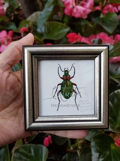 Tiny Golden Ground Beetle Framed Giclée Print Unique Gifts, Handmade Gifts, Bird Prints, Beetle, Green Colors, Printing Process, Iridescent, Giclee Print, Watercolor Paintings