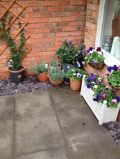 Winter flowers: Hebedonna, Lavender, Ceanothus, Carnations and winter Pansies (purple theme) 'dead heading' once a week keeps these plants flowering through the winter months