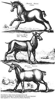 Year: 1486  Artist: Erhard Reuwich  Originally published in: Perigrinationes ad Terram Sanctam