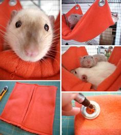 10 DIY Pet Projects totally need to make this.my rats ALWAYS tear there hammock up whether store-bought or from old sweatshirtstotally need to make this.my rats ALWAYS tear there hammock up whether store-bought or from old sweatshirts Hamsters, Rodents, Rata Dumbo, Rat Cage Accessories, Animals And Pets, Cute Animals, Strange Animals, Rat Hammock, Pocket Pet