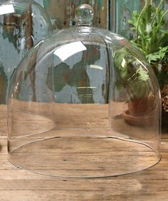 Glass Dome Glass cloche Gardening gift Cheese Plate Home Glass Domes, Glass Vase, Kentucky, Bliss Home And Design, Cake Pedestal, Cake Dome, How To Make Terrariums, Perfume, Apothecary Jars