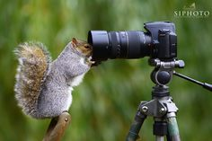 Fotografia Let me take another selfie de Simon Roy na 500px 654a3dd40c2c3