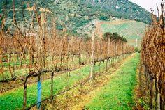 São muitas as vinícolas nos arredores de Santiago.