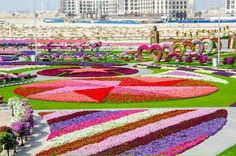 Recently launched Dubai Miracle Garden, located in Dubailand دبي لاند, is spread over ft of land & contains over 45 million flowers. In addition, it includes a flower wall, as well as the world's biggest flower clock & giant pyramid of flowers. Topiary Garden, Garden Art, Most Beautiful Gardens, Beautiful Flowers, Amazing Gardens, Dubai Garden, Million Flowers, Dubai Miracle Garden, Dig Gardens