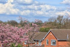 https://flic.kr/p/G9gUcE | Spring | Spring is here, cherry blossom and enhance the housing estate.