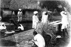 East Indians preparing rice. Jamaica  Circa 1890