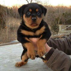 Pretty Pup