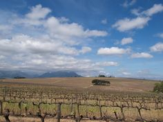 Stellenbosch in Western Cape Area Overview Country Homes, Coastal Homes, Cape, Mountains, Travel, Outdoor, Country Cottages, Cottages By The Sea, Mantle