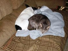 Pete and his snuggle buddy Tac the cat.