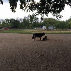 Hannah and Arrow at Shell Park :)