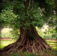 tree by sweet.dreams