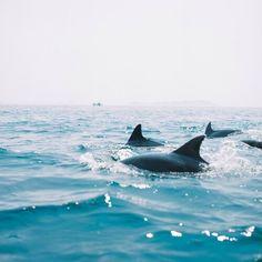 Expressions-Of-Nature: kumamoto, japan : yasushi kakizaki sea creatures, big Orcas, Cute Baby Animals, Animals And Pets, Beautiful Creatures, Animals Beautiful, Shotting Photo, Beach Aesthetic, Ocean Life, Marine Life