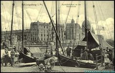 Königsberg in Pr., Kreis Königsberg,Hafen, Kartoffel, Ostpreußen,:552617