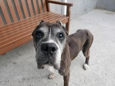 GEORGE - A1112961 - - Brooklyn  TO BE DESTROYED 05/27/17: ****CAN BE PUBLICLY ADOPTED**** -  Click for info & Current Status: http://nycdogs.urgentpodr.org/george-a1112961/