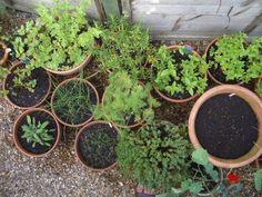 Growing vegetables in small containers Veg Garden, Green Garden, Garden Plants, Balcony Gardening, Growing Vegetables In Containers, Planting Vegetables, Nail Polish, Grow Your Own, Container Gardening