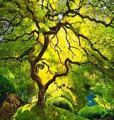 dappled light on oak tree - Google Search