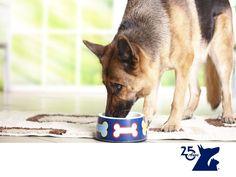 Raciones de comida para perros. LA MEJOR CLÍNICA VETERINARIA. Pocas personas saben que cantidad de comida deben darle a su mascota y esto dependerá del tamaño y edad del perro, así como su actividad diaria. Un perro de mayor tamaño que realice mucha actividad física requerirá de mayor cantidad energética que uno pequeño que tiene una actividad más sedentaria. En Clínica Veterinaria del Bosque te decimos cuál es la cantidad necesaria que requiere tu mascota. www.veterinariadelbosque.com…