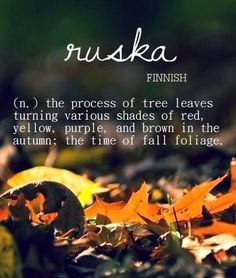 Ruska (Finnish) : the process of tree leaves turning various shades of red, yellow, purple, and brown in the autumn; the time of fall foliage Unusual Words, Unique Words, Cool Words, The Words, Pretty Words, Beautiful Words, Beautiful Meaning, Finnish Words, Sayings