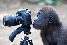 Monkey Snapper http://www.news.com.au/travel/galleries/gallery-e6frflw0-1226481840802