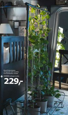My favorite thing in the latest #IKEA catalogue: vines climbing in clothing rack. Of course there was no price or any information about the rack... EDIT: OK, the rack is called PORTIS and it's cheap like sausages.