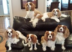 Some of my guests Lilypaddy's Bed & Biscuit
