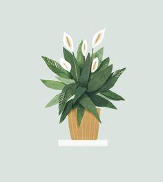 Plantas de interior y exterior con grandes beneficios