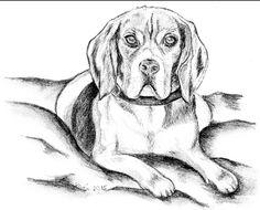 Beagle Touch Down, Bleistiftzeichnung