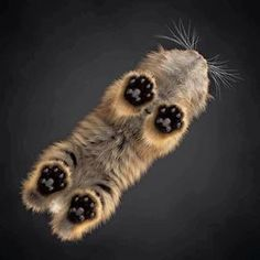 Wow ! Taken from under a glass table top. Look at those paws
