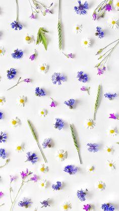 Floral Wallpaper Phone, Wallpaper Nature Flowers, Flower Background Wallpaper, Iphone Wallpaper Tumblr Aesthetic, Purple Wallpaper, Cute Wallpaper Backgrounds, Flower Backgrounds, Pretty Wallpapers, Colorful Wallpaper