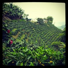 Colombian Coffee, Coffee Industry, Travel Store, Coffee Farm, Coffee Photos, Small Towns, Latina, Around The Worlds, San