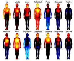 Estas son las partes del cuerpo en las que se sienten las emociones | Microsiervos (Ciencia). http://www.farmaciafrancesa.com