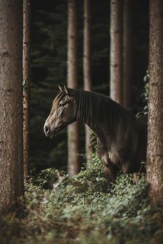 Absolutely stunning horse pictures for all the horse lovers out there #horses#horse#horselovers#horselove#lovinghorses#beautifulhorsepictures#horseriding#stunninghorses#beautifulhorses#loveforhorses#stallions#polopony#pony#whitehorses#equestrian#marwarihorse#marwari#thoroughbred#ponies#horsepictures#horsephotography#horsebackriding#LAPOLO Beautiful Horse Pictures, Beautiful Horses, Polo Horse, Pebble Beach Concours, Horse Training, Horse Breeds, Horse Photography, Thoroughbred, Horse Art